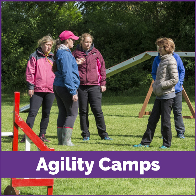 Agility-camps